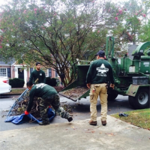 Atlanta Arbor Tree Care Specialist, LLC